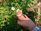 Las flores del Jardín del Centro Amma. Octubre 2016