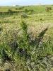 seguimiento-plantacion-arboles-segovia