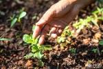 Semillas Arboles y Plantas