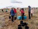 Última plantación de la temporada en Marazuela